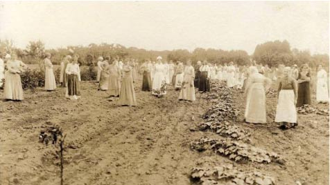 Women patients farming at the London Asylum for the Insane in the early 1900s