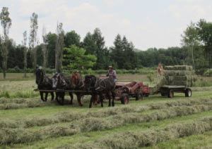 Donn and Maryrose put up hay from their land using a 4-horse team.  The hay has been cut and raked using horse-drawn equipment. They use a 24 hp Honda engine to drives a PTO for baling it. Here Donn bales the hay while  Maryrose stacks it on the wagon they draw behind the baler.