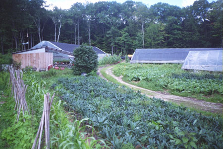 A view of Ricky's farm showing the crop diversity, fields grown using cardboard mulch and worm hotels, and hoophouses.