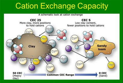 Cation Exchange