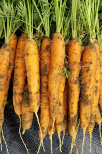 Cover of Carrots