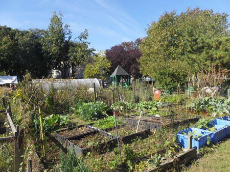 Carthan Community Garden.
