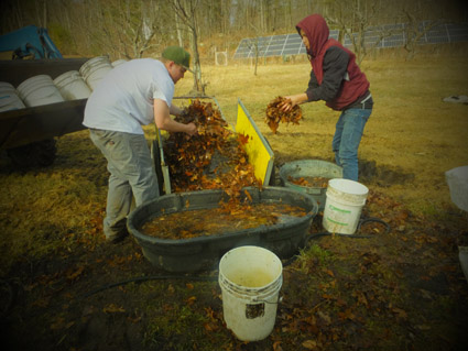 Wetting the leaves before filling buckets