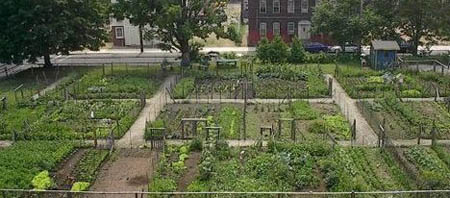 Editorial La Finquita Community Garden in Holyoke