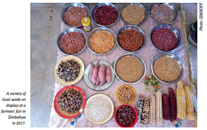Food Sovereignty local seeds in Zimbabwe