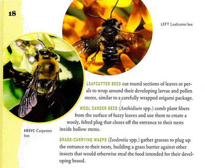 Leafcutter-and-Carpenter-Bees