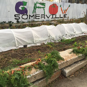A low tunnel protects South Street crops from early frost
