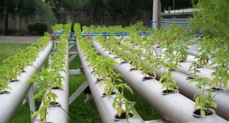 Certified organic hydroponic facility in Montreal