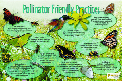 Pollinator Friendly Practices