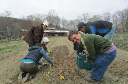 Crew works in carrot bed