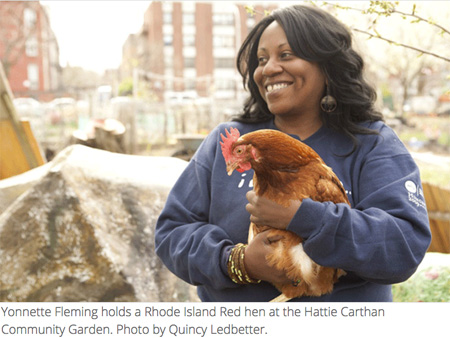 photo by Quincy Ledbetter, courtesy Yes! Magazine Yonnette Fleming holds one of the hens at the Hattie Carthan Community Garden