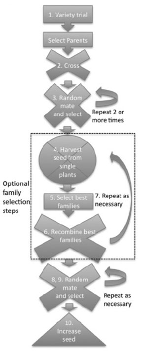 Plant Breeding Flow Chart