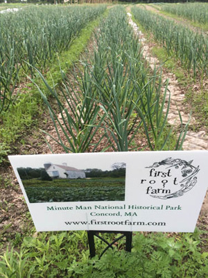 Leeks in field behind First Root Farm sign