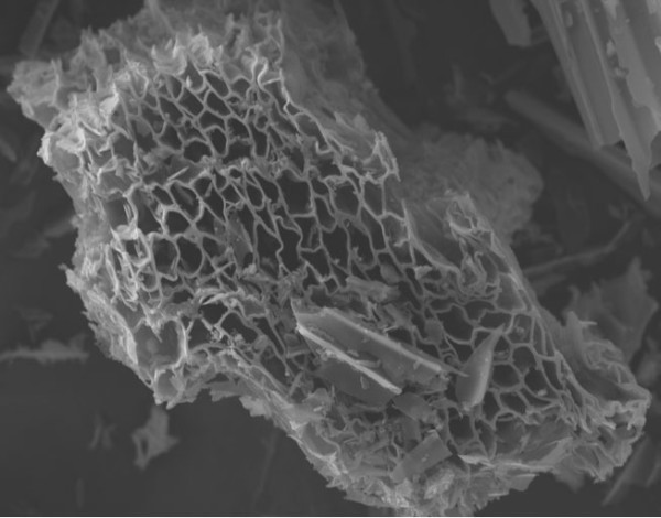 Figure 2. The skeletal structure of biochar looks like a carbon sponge.