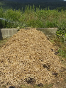 One more layer of compost, then straw, and finally a good soaking.