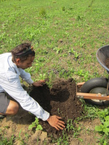 Ian Back adds compost while planting one of the fruit trees in the fruit forest experiment