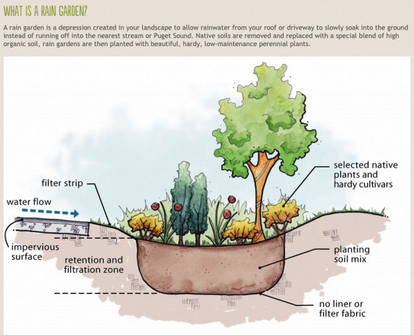 pg 7 What is a rain garden_